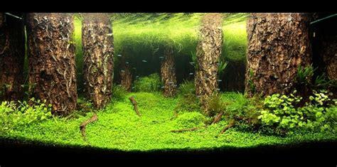 aquascape near me nature aquarium by jamie lin aqua forest aquarium