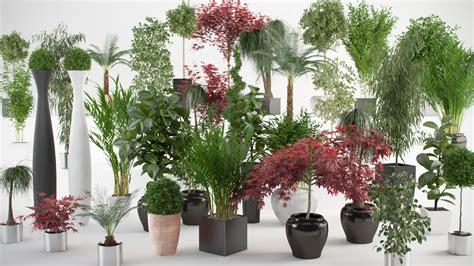cuidado plantas interior 7 cuidados b 225 sicos a ter as plantas de interior