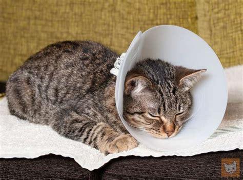 wann ist katze ausgewachsen wann muss eine katze zum tierarzt 5 warnsignale