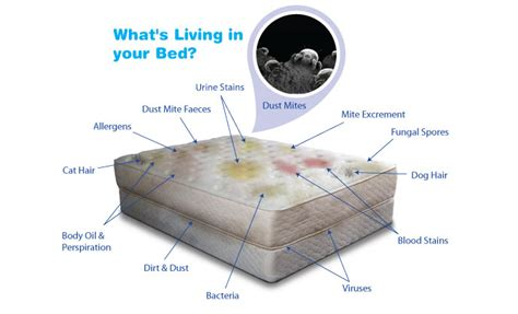 Can You Carpet Clean A Mattress by Mattress Cleaning Fort Wayne In Referral Cleaning