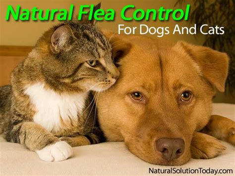 flea killer for puppies flea for dogs and cats