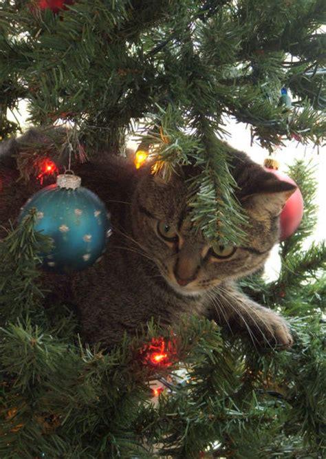 cat first seen christmas tree tree cats 40 pics izismile