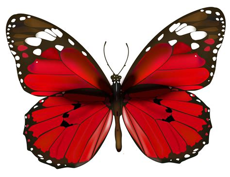 free butterfly clipart butterfly png clipart