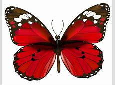 Red Butterfly PNG Clipart Free Clipart Downloads Butterflies