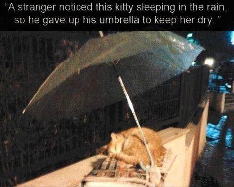 stranger noticed cat sleeping   rain   gave   umbrella    dry pictures