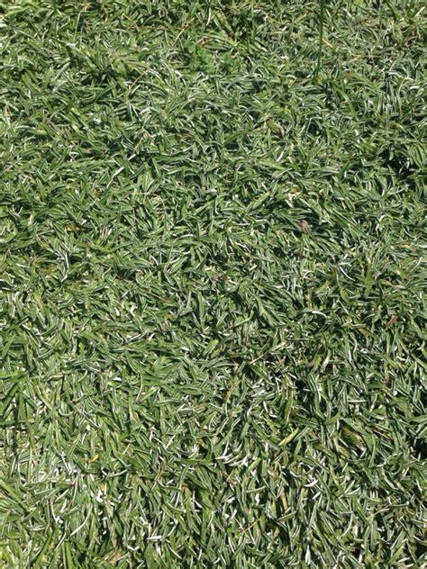 can dogs use human shoo silver carpet ground cover carpet vidalondon