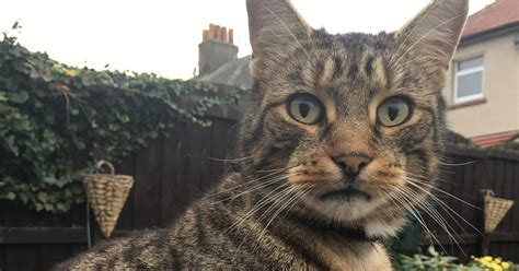 lancaster morecambe pet search lost cats