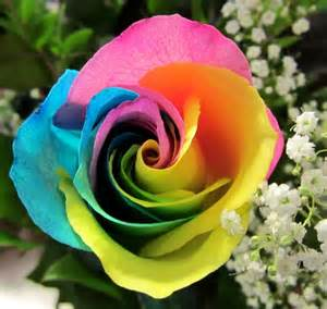 Rainbow rose cube products local florist in san diego ca same