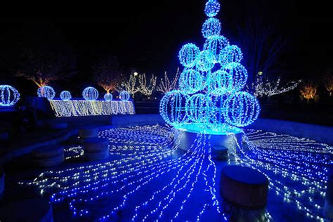 winter lights at nc arboretum