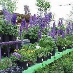 Garden Center Chicago Gethsemane Garden Center 206 Photos 252 Reviews
