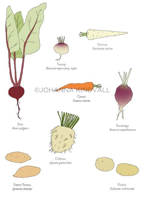 list root vegetables shop at johannak