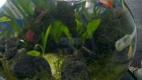 aquascape youtube my bowl aquascape youtube