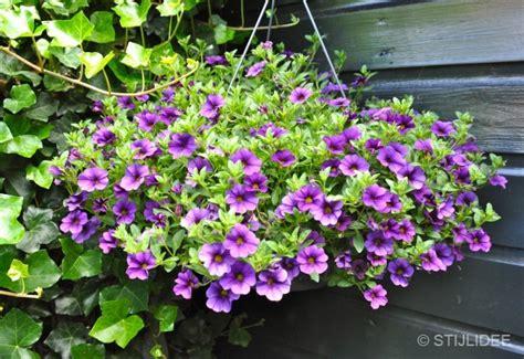 hang planten bloemen buiten hangplant met paarse bloemen stijlidee interieuradvies