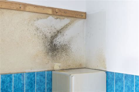 remove moisture from bathroom removing moisture from bathroom top tips and tricks