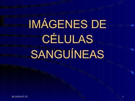 imagenes to pdf imagenes celulas sanguineas