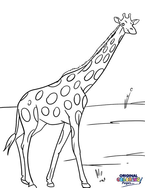 Giraffe Coloring Pages by Giraffes Coloring Pages Original Coloring Pages