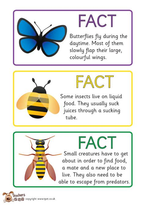 fact card template teachers pet free minibeast fact cards science and