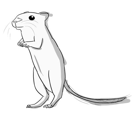 gerbil pages coloring pages