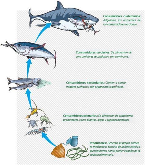 cadena alimenticia acuatica descomponedores cadena alimentaria marina imagui