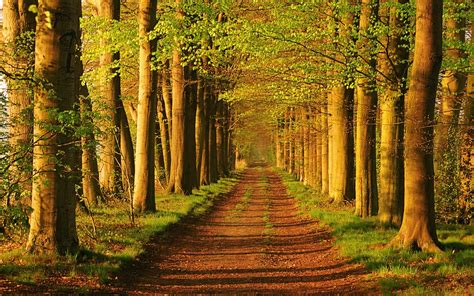 the forest in the netherlands wallpapers and images