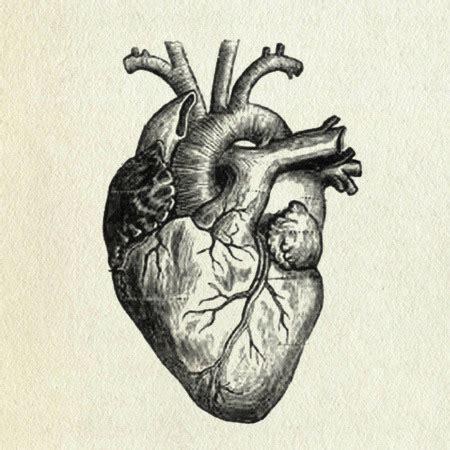 anatomically correct heart tattoo superior vena cava