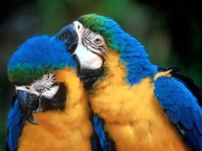 blue and gold macaw parrots 2017 2018 best cars reviews