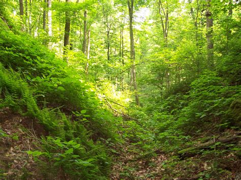 The Of The Forest kentucky s state forests tygarts state forest
