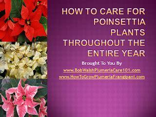 frangipani plumeria tropical plant care slideshow