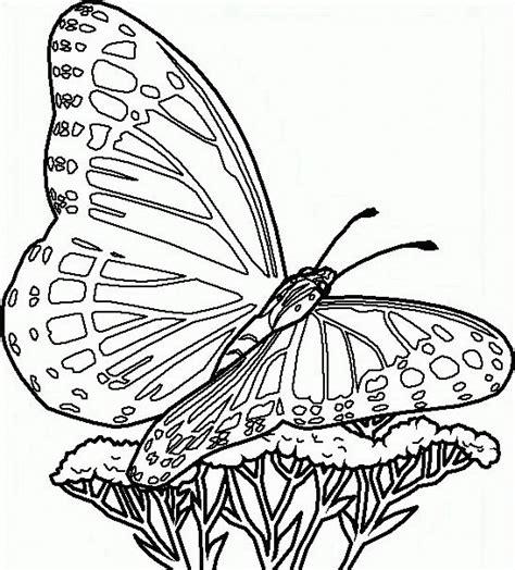 disegni da colorare di fiori e farfalle disegni da colorare farfalla 40 disegnicoloragratis