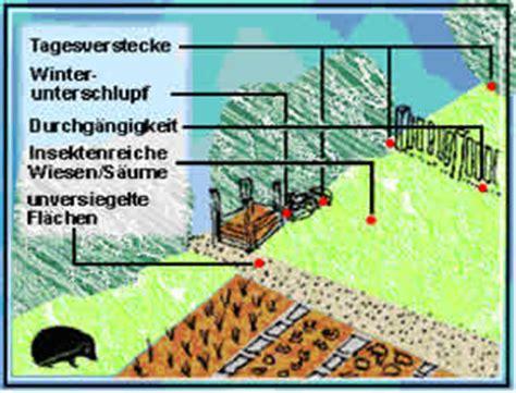 tiere für den garten bauen und tiere igel