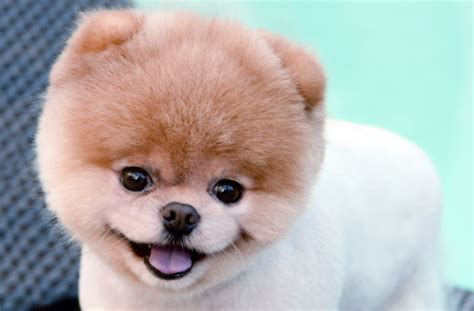 cutest puppy in the world cutest dogs in the world 2014 www imgkid the image kid has it