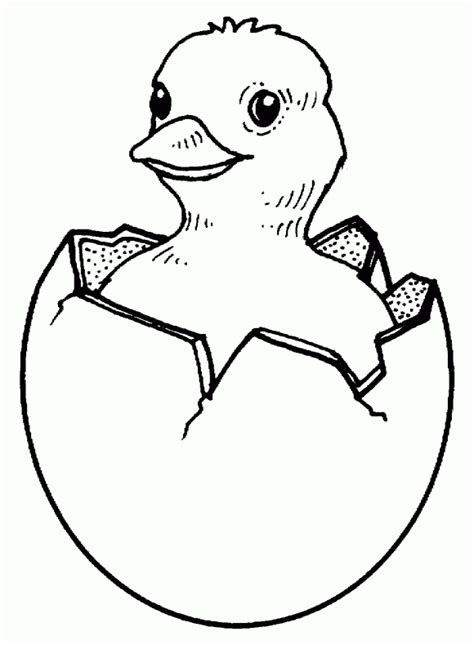 free printable chicken coloring page for kids printable chicken chicken easter coloring pages baby chicks easter