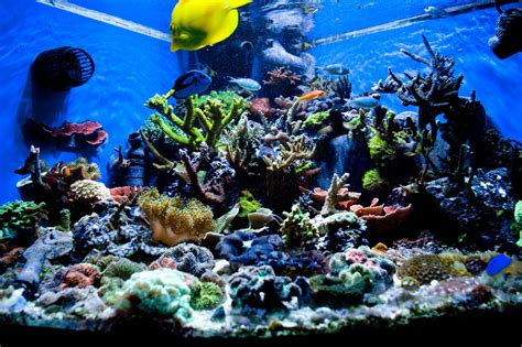 saltwater aquarium aquascape designs gallery barrier reef
