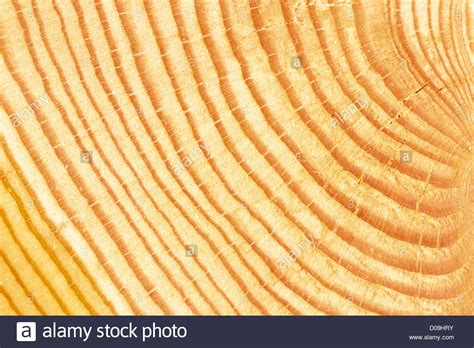 growth pattern en francais a cross section view of a log showing annual growth rings