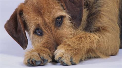 puppy has bloody diarrhea what causes a to diarrhea with blood and mucous reference