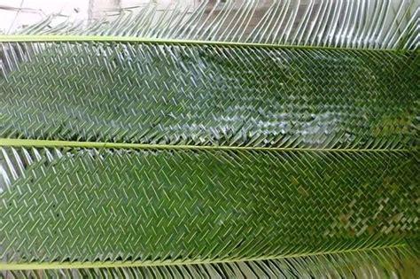 Membuat Zpt Dari Daun Kelor | membuat anyaman dari janur daun kelapa kumpulan kreasi