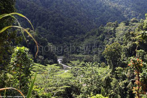 amazon indonesia indonesian rainforest slideshow rainforest in west papua