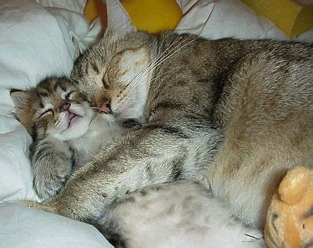 and cat cuddling cats 171 and pet photos of dogs cats kittens puppies and other pets at