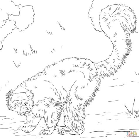 red ruffed lemur coloring page free printable coloring pages