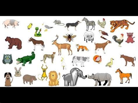imagenes de animales salvajes y domesticos imagenes de animales salvajes y domesticos animados imagui