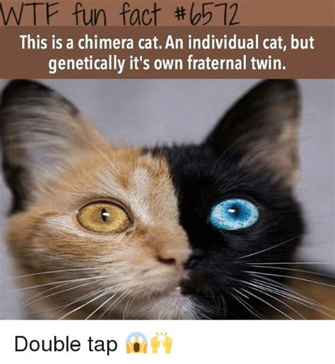 Cat Facts Meme - funny wtf fun facts memes of 2017 on sizzle