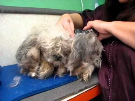 Clipping And Grooming Your Terrier the world s catalog of ideas