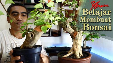 cara membuat bunga kertas menjadi bonsai cara membuat bonsai bunga kertas bougainvillea youtube