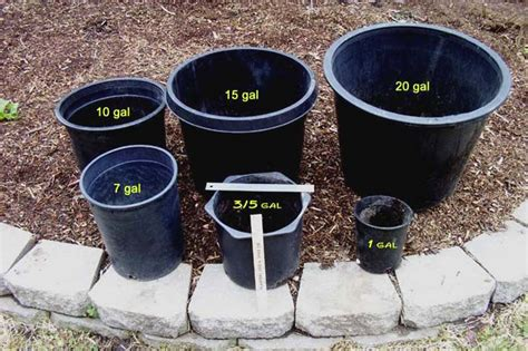 15 gallon planter pot for large tomatoes