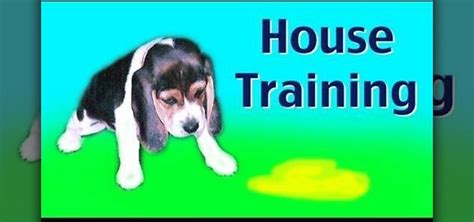how to house train a rescue dog how to house train your new puppy or rescue dog 171 dogs wonderhowto