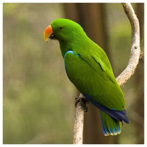 green parrot i can t resist pinterest