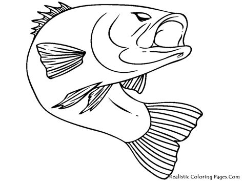 bass fish coloring pages free fish realistic coloring pages realistic coloring pages