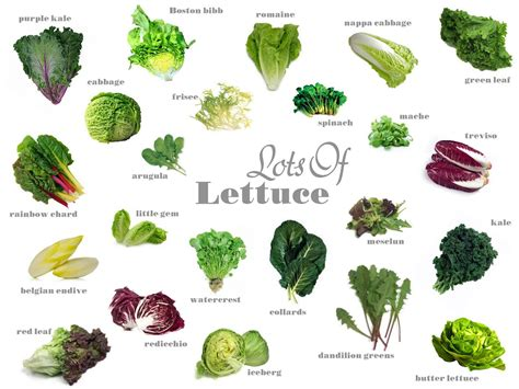 vegetables types of salaad your produce lettuce varieties plantbased diet plantpowerz green lettuce