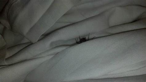 spider in my bed spider in my bed picture of residence inn cincinnati