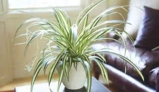 9 plantes d int 233 rieur qui nettoient l air et qui sont